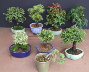 bonsai_07