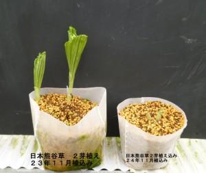 熊谷草生分解ポット植え