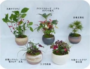 寄せ植え鉄鉢