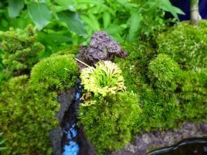 寄せ植え岩ヒバ